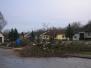 Kastanienbäume umschneiden 11. März 2008